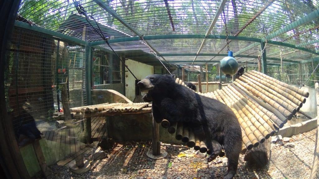 Tat Kuang Si Bear Sanctuary