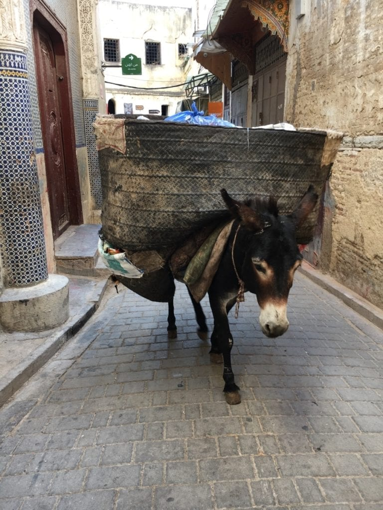 Donkey in the Fes Medina