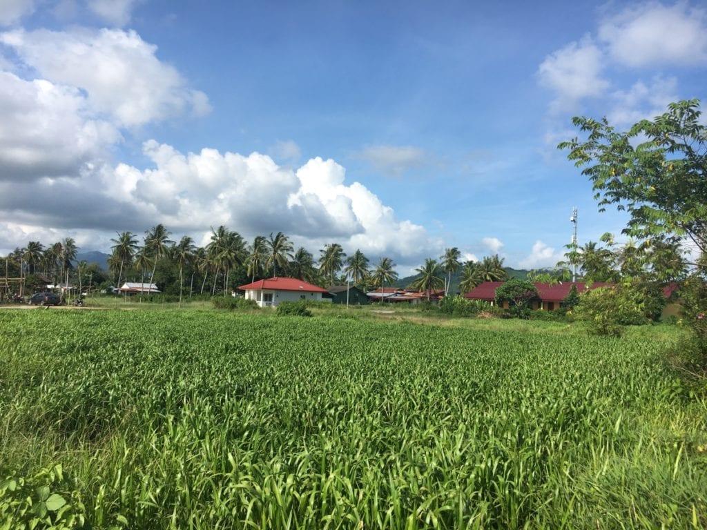 Lush Langkawi rice fields